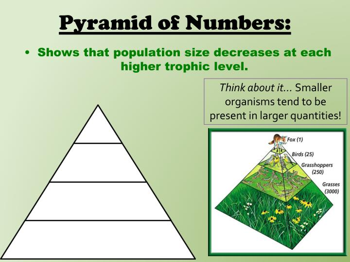 Pyramid of Numbers: