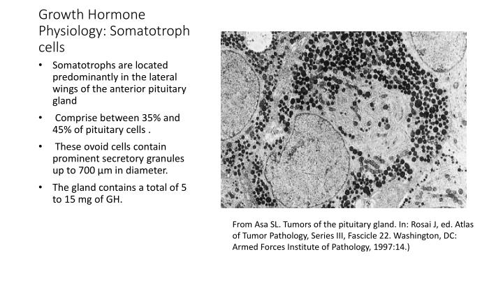 Growth hormone physiology somatotroph cells