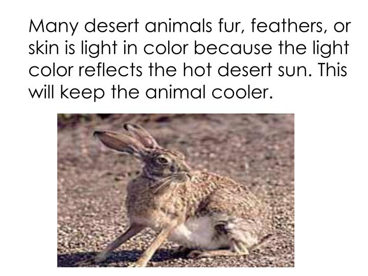 Many desert animals fur, feathers, or skin is light in color because the light color reflects the hot desert