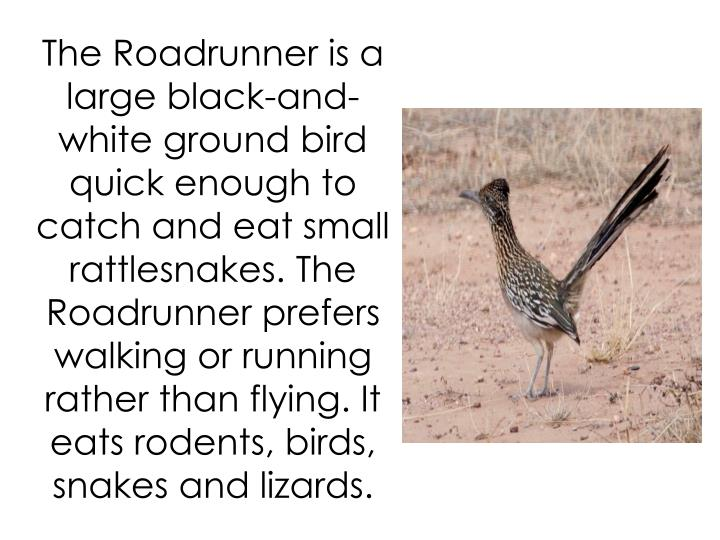 The Roadrunner is a