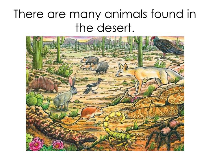 There are many animals found in the desert.