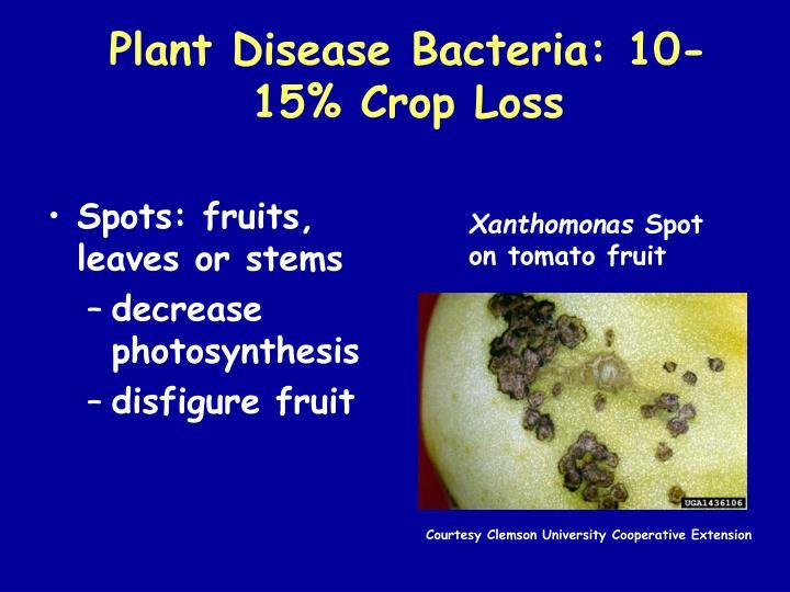 Plant Disease Bacteria: 10-15% Crop Loss