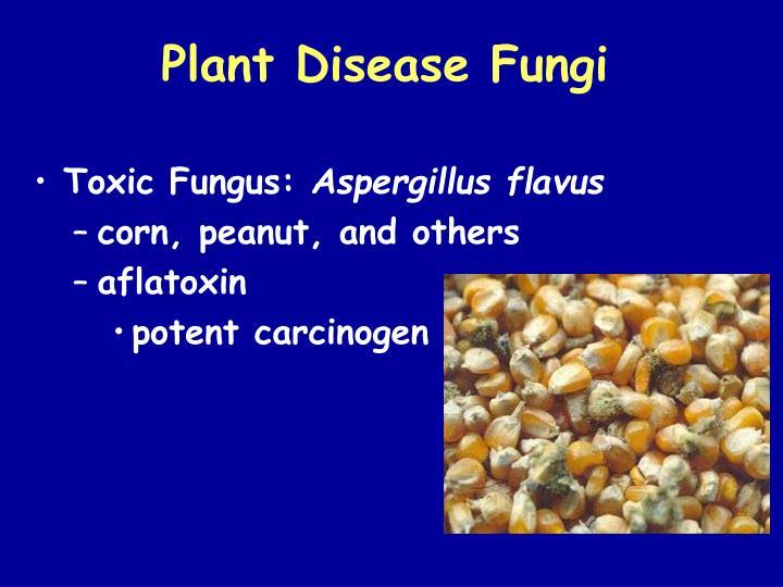 Plant Disease Fungi