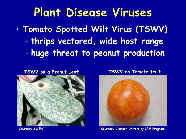 Plant Disease Viruses