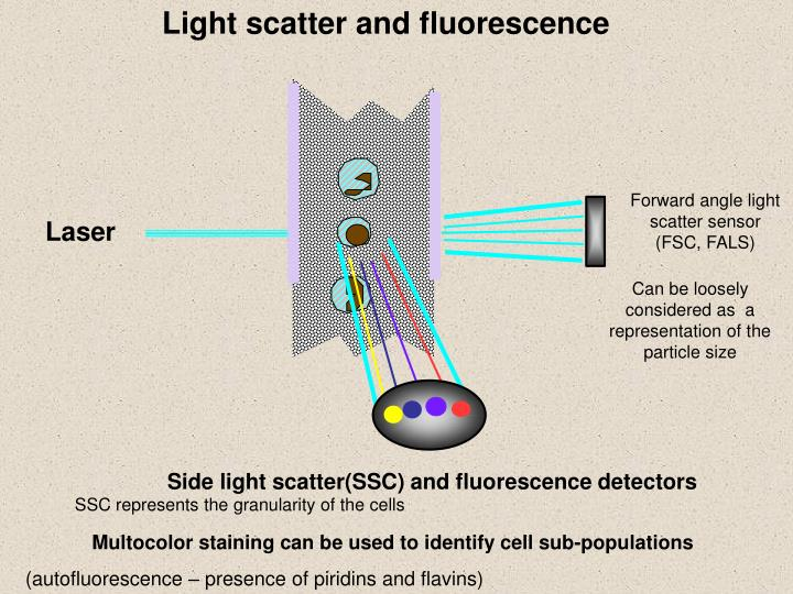 Light scatter and f