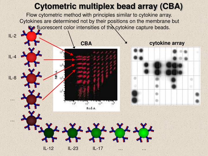 Cytometric multiplex bead array (CBA)
