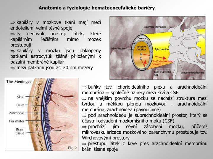 Anatomie a fyziologie hematoencefalické bariéry