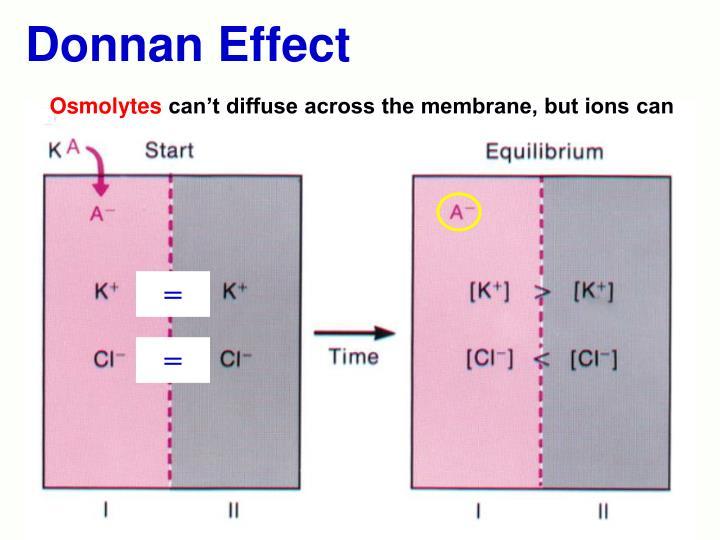 Donnan Effect