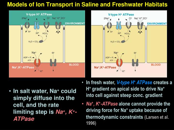 Models of Ion Transport in Saline and Freshwater Habitats