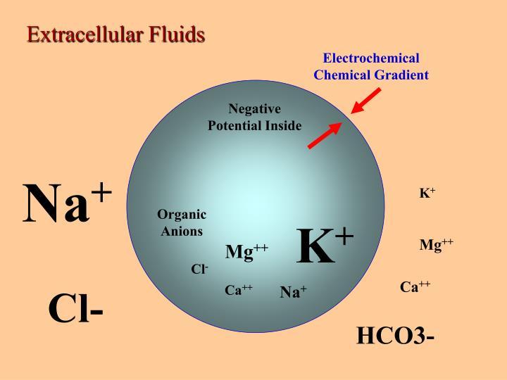 Extracellular Fluids