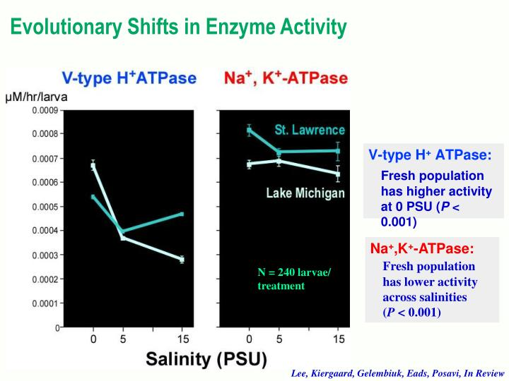 Evolutionary Shifts in Enzyme Activity