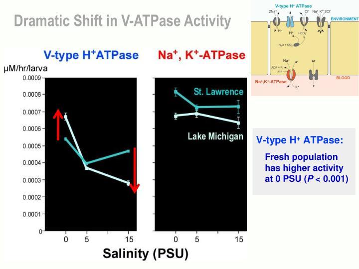 Dramatic Shift in V-ATPase Activity