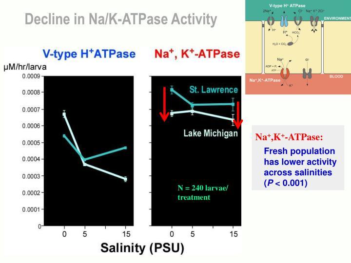 Decline in Na/K-ATPase Activity