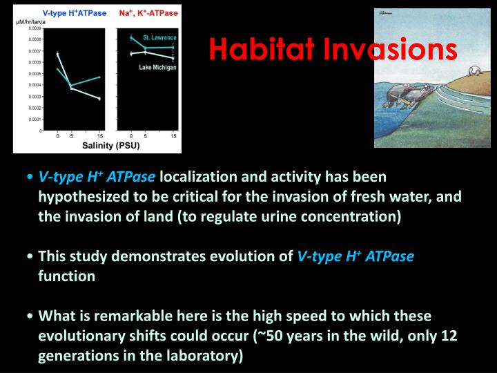 Habitat Invasions