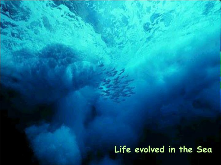 Life evolved in the Sea