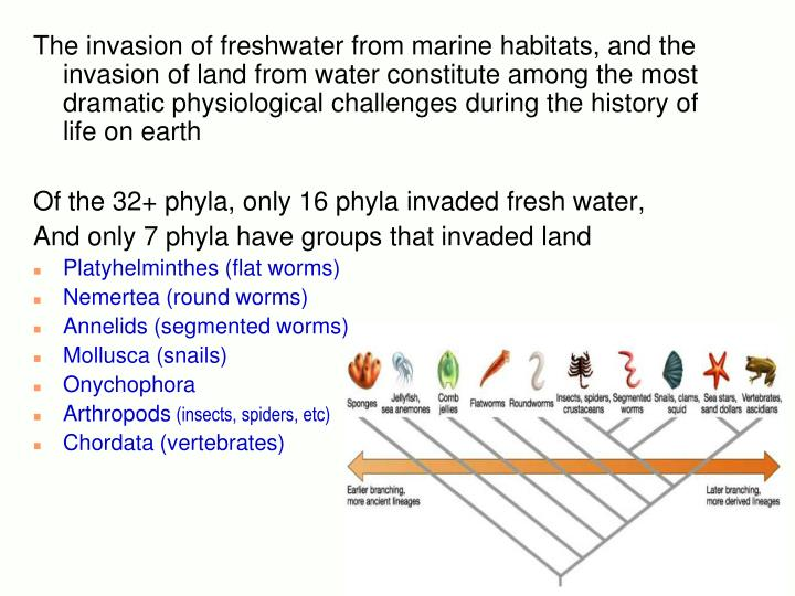 The invasion of freshwater from marine habitats, and the invasion of land from water constitute among the most dramatic physiological challenges during the history of life on earth