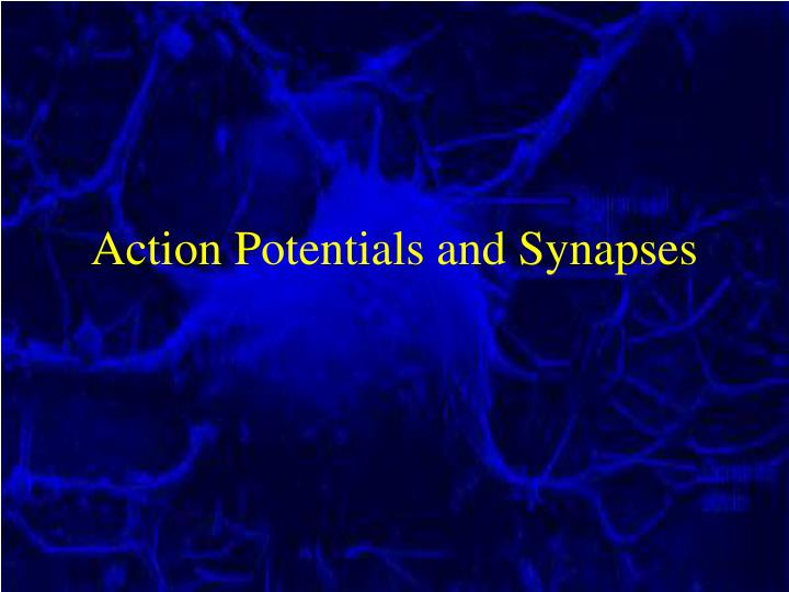 action potentials and synapses n.