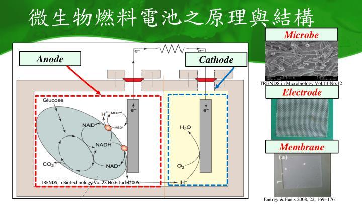 微生物燃料電池之原理與結構