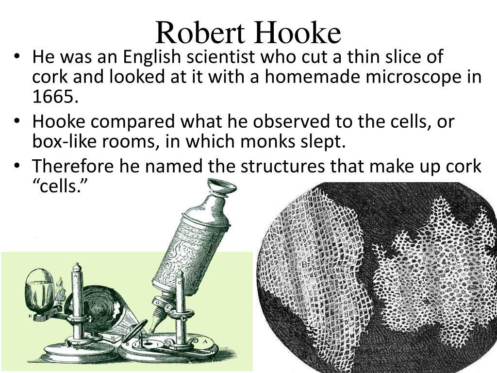 Microscope Anton Van Leeuwenhoek Discovery - Micropedia