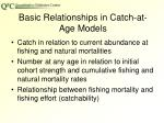 basic relationships in catch at age models