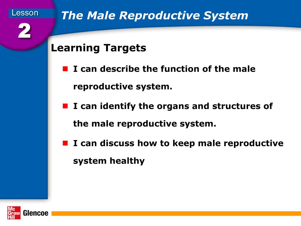 Ppt The Male Reproductive System Powerpoint Presentation Id5969983