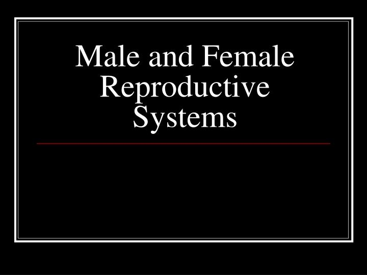 male and female reproductive systems n.