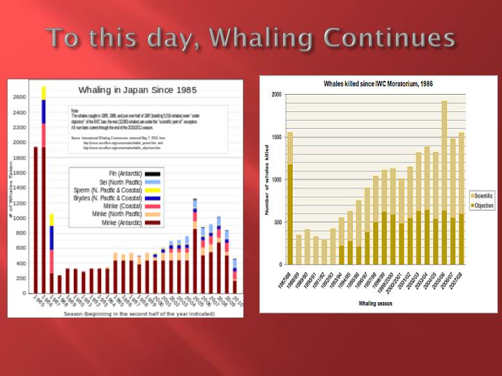 To this day, Whaling Continues