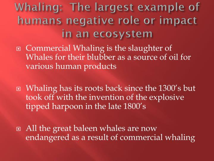 Whaling:  The largest example of humans negative role or impact in an ecosystem