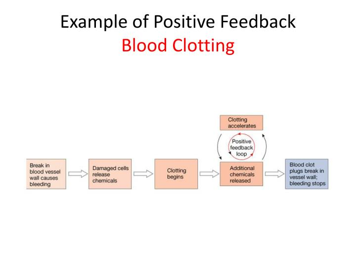 Ppt Homeostasis And Feedback Powerpoint Presentation Id5976411