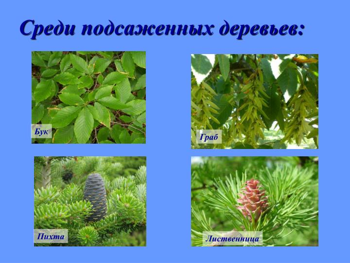 Среди подсаженных деревьев: