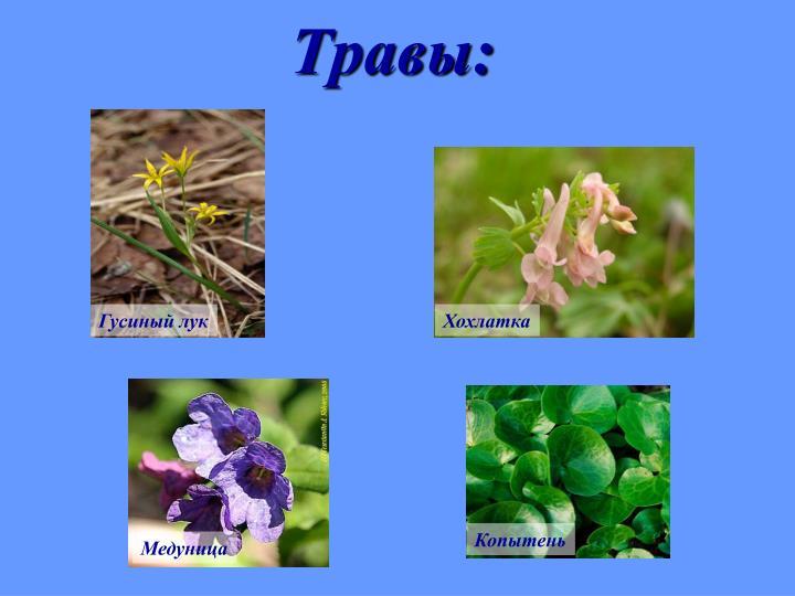 Травы: