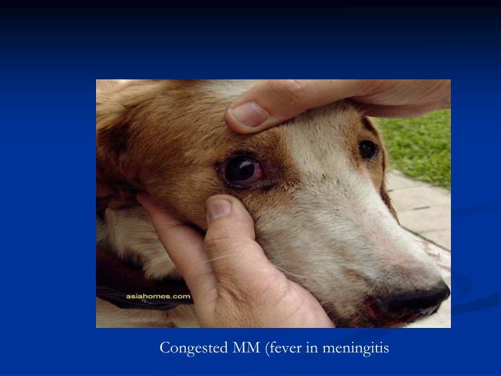 Congested MM (fever in meningitis