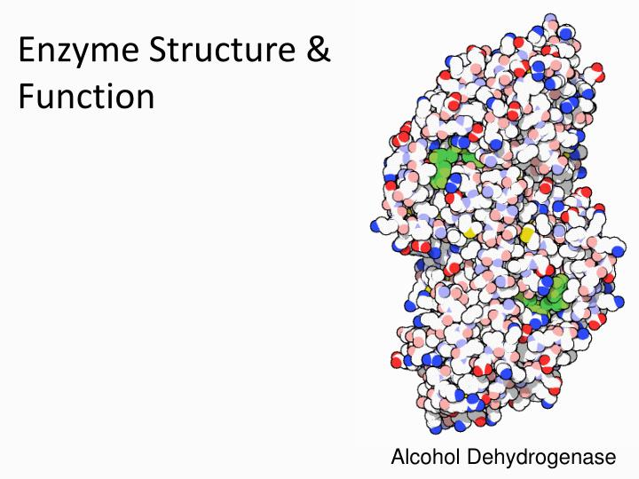 the structure and function of an enzyme Systematically analyse the structure–function relationships and follow the evolutionary history of hydrogen peroxide dismutating enzymes the aim of this review is to give a detailed survey on the increasing field of enzymes with.