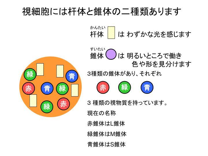 3種類の錐体があり、それぞれ