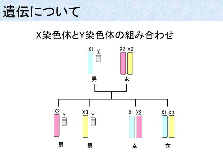 遺伝について