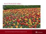 pour le festival des tulipes