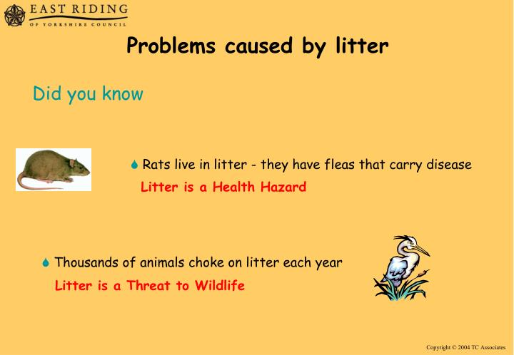 Problems caused by litter