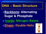 dna basic structure