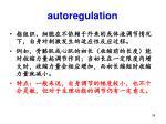 autoregulation