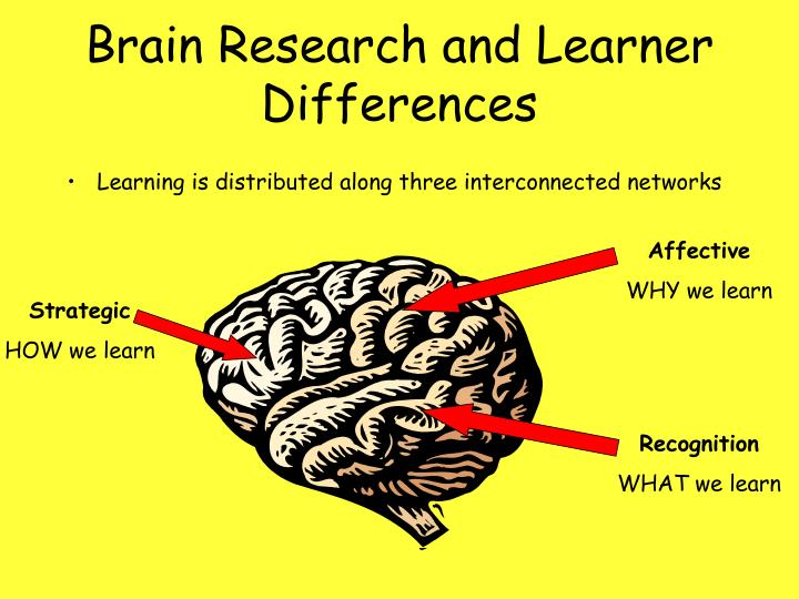Brain Research and Learner Differences