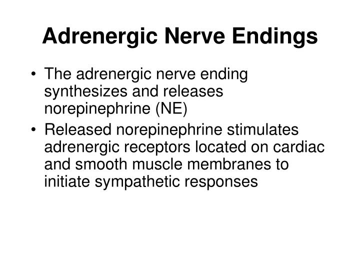 Adrenergic nerve endings