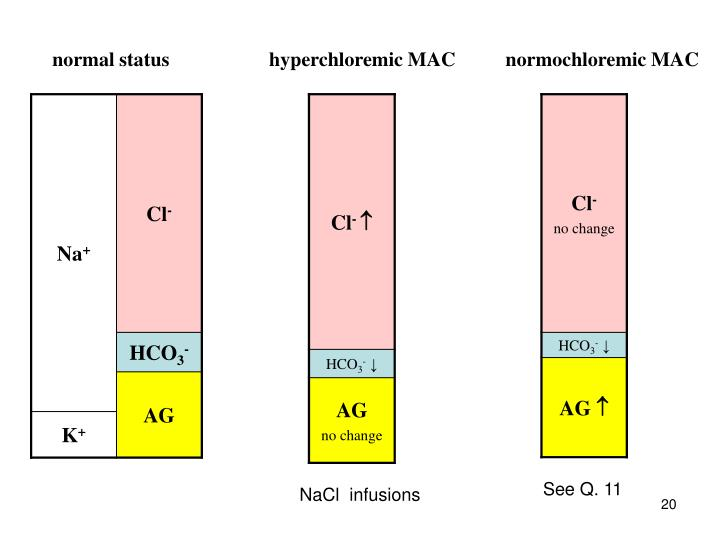 normal status                    hyperchloremic MAC          normochloremic MAC