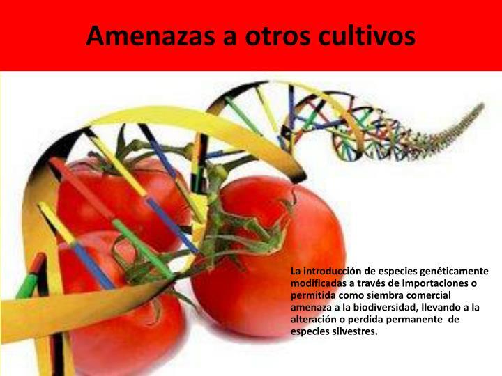 Amenazas a otros cultivos