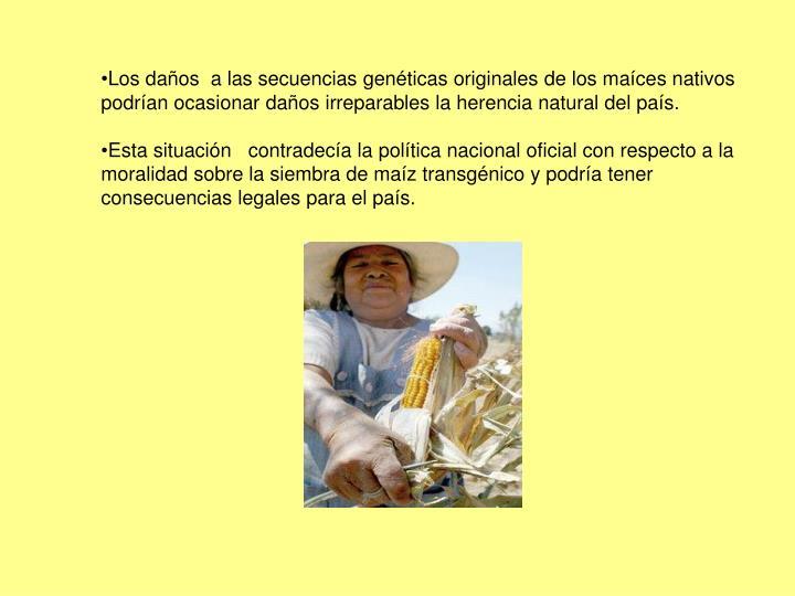 Los daños  a las secuencias genéticas originales de los maíces nativos podrían ocasionar daños irreparables la herencia natural del país.