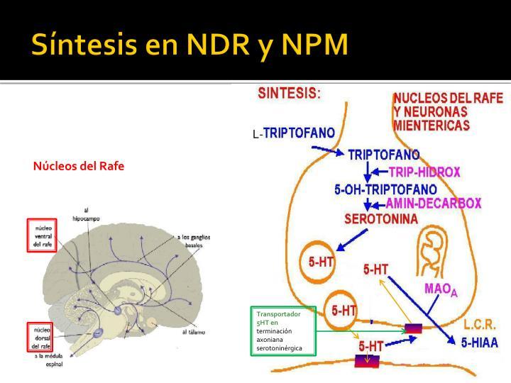 Síntesis en NDR y NPM