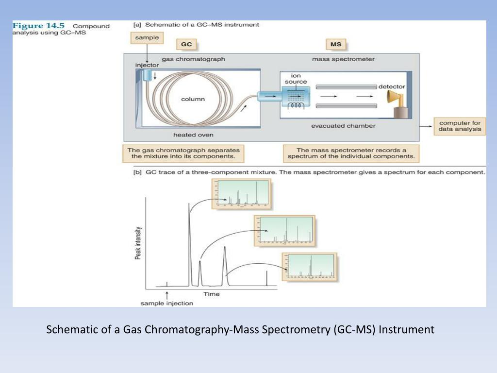 PPT - GC-MS Gas Chromatography-M Spectrometry PowerPoint ... Gc Ms Schematic on