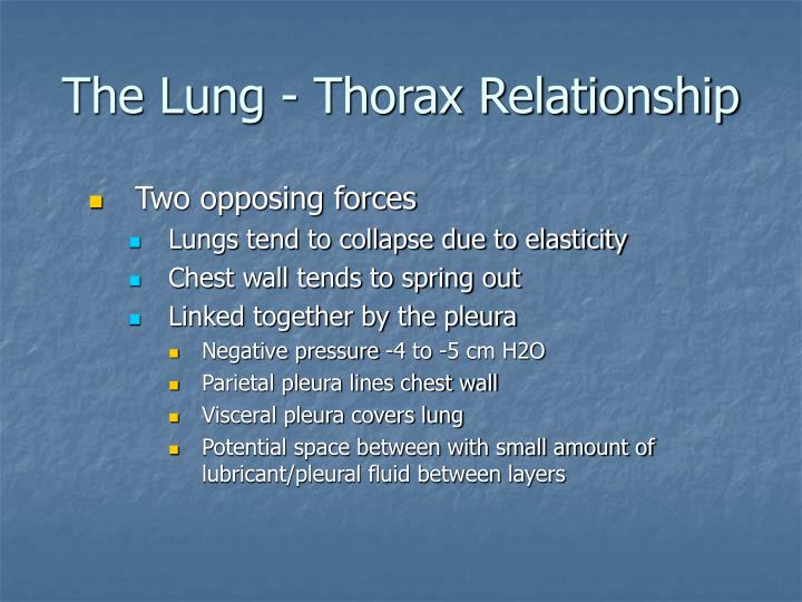 The lung thorax relationship