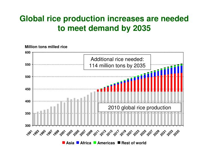 Global rice production increases are needed to meet demand by 2035