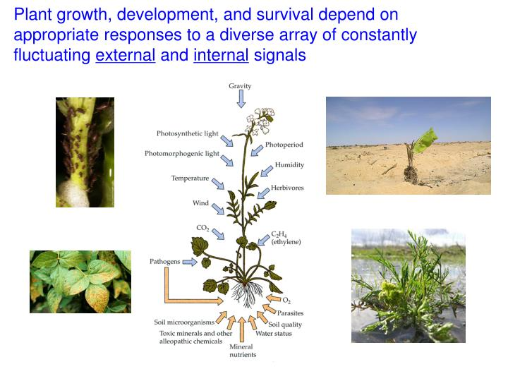Plant growth, development, and survival depend on appropriate responses to a diverse array of constantly fluctuating