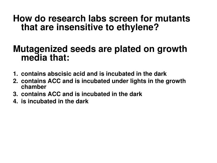 How do research labs screen for mutants that are insensitive to ethylene?